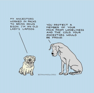 Memes, Tumblr, and Blog: MY ANCESTORS  WORKED IN PACKS  TO BRING DOWN  8ISON. I'M AN OLD  LADY'S LAPDOG  MEMBER OF YOUR  PACK FROM LONELINEsS  AND THE COLD. YOUR  ANCESTORS WOULD  J)  @DRAWINGSorDOGS positive-memes:  Good boys