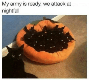29 Best October Memes Of The Day-10: My army is ready, we attack at  nightfall 29 Best October Memes Of The Day-10