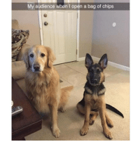 They're definitely wondering why you're not sharing | @cuteandfuzzybunch: My audience when I open a bag of chips They're definitely wondering why you're not sharing | @cuteandfuzzybunch