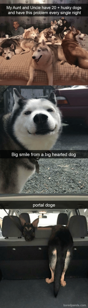 Dog snapsvia @animalsnaps: My Aunt and Uncle have 20 + husky dogs  and have this problem every single night   Big smile from a big hearted dog   portal doge  boredpanda.com Dog snapsvia @animalsnaps