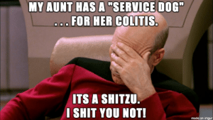 "Fake service dogs: MY AUNT HAS A ""SERVICE DOG""  a..FOR HER COLITIS.  ITS A SHITZU.  SHIT YOU NOT!  made on imgur Fake service dogs"