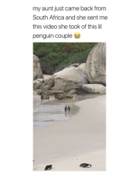 Africa, Life, and Love: my aunt just came back from  South Africa and she sent me  this video she took of this lil  penguin couple Damn penguins have a better love life than me