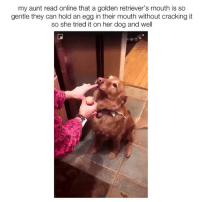Funny, Videos, and Her: my aunt read online that a golden retriever's mouth is so  gentle they can hold an egg in their mouth without cracking it  so she tried it on her dog and well @epicfunnypage has the funniest videos
