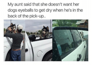 Animals, Dogs, and Memes: My aunt said that she doesn't want her  dogs eyeballs to get dry when he's in the  back of the pick-up.. Dog Memes Of The Day 32 Pics – Ep50 #animalmemes #dogmemes #memes - Lovely Animals World