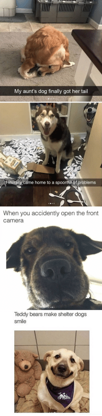 <p>dog memes</p>: My aunt's dog finally got her tail   literally came home to a spoonful of problems   When you accidently open the front  Camera   leddy bears make shelter dogs  smile <p>dog memes</p>