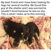 Best Friend, Dogs, and God: My best friend and I have been looking for  dogs for several months. We found this  guy at the shelter and I was worried he  wouldn't bond because he was so shy.  This is what I woke up to this morning  Reddit u/emzieees  @DrSmashlove  沙 When ya ex leaves u broken, downtrodden and in a semi-permanent state of sadness and darkness and then God puts a sweet soul in ya life to heal the condition of your heart for a short time before U squander that relationship with a mix of unnecessary jealousy and spitefulness thereby relegating u to your previous state before commencing the cycle one mo 'gain BLESS UPPINGTON 😬😍😂