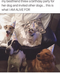 Dog, Iam, and Dogging: my best friend threw a birthday party for  her dog and invited other dogs... this is  what IAM ALIVE FOR