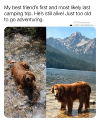 Alive, Friends, and Memes: My best friend's first and most likely last  camping trip. He's still alive! Just too old  to go adventuring  @DrSmashlove  reddit u/SirDitamus Happy Monday, beloveds ❤️