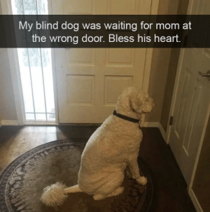 Memes, Heart, and Waiting...: My blind dog was waiting for mom at  the wrong door. Bless his heart.