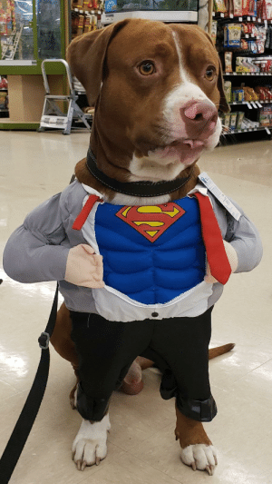 My bosses rescue dog is very shy so we're trying to make him more comfortable with affection. Here he is in Lowe's doing great.: My bosses rescue dog is very shy so we're trying to make him more comfortable with affection. Here he is in Lowe's doing great.