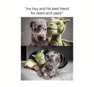 "Animals, Best Friend, and Dogs: my boy and his best friend  for years and years'""  35 Dog Memes Of The Day 32 Pics – Ep39 #dogs #dogmemes #lovelyanimalsworld - Lovely Animals World"