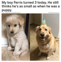"Animals, Basketball, and Ex's: My boy Ferris turned 3 today. He still  thinks he's as small as when he was a  puppy  Pic: reddit u/ZarZarBinks22  @DrSmashlove So the discussion about stealing-appropriating clothing from exes has begotten untold amount of humor and, as always, Smash is here for the fvckery - all of it 🤗😂: (1) Yesterday, one of my followers commented: ""Right now on my teenage daughter's bed is a large teddy bear her old boyfriend gave her and it's wearing a fleece hoodie that her new boyfriend gave her. This poor bear didn't ask for this $h!t!!🤣"" WHEN BOTH YO MAMA AND YO STUFFED ANIMALS ARE JUDGING U BABY GIRL U NEED TO HIT THAT PAUSE BUTTON ON YO LIFE AND GET RIGHT WITH GOD, I CAN'T 😂. (2) Sometimes I get messages from my lil homegirls that I have have to simply repost with no explanation because the legend speaks for itself (herself? Lol): ""To be honest I keep an old ex's basketball shorts at my place and lie and say they're mine...my overnight guests just want to believe they are the first homie to ever touch my precious flower so they believe it naively and wear them to sleep. I do wash them but still: LIT'RAL PECKER KISS."" Ladies...FOR EFF'S SAKE 😂...Y'all heard of Sisterhood of the Traveling Pants...Well if u sleep with my homegirl u are inducted to the Brotherhood of the Jizzy Nike Shorts 😩 ... Baptized in Babies ... Submerged in the Swimmers ... of all men who came before you ... literally 'came' before u 😢🔫 ... I'm done bruv u ladies got savage in yo cot damn blood...this ain't chu...who made u like dis... maybe u ladies are just doing u and *I'M* the one who need to meditate and talk to God ... in fact imma do that right quick y'all be safe 😩😂😂😂"