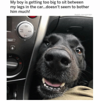 Memes, Reddit, and Drive: My boy is getting too big to sit between  my legs in the car...doesn't seem to bother  him much!  Reddit u/awright1221  FM AUX  AM  ALx  TEXT  6 Wouldn't be able to drive. Would have to keep booping 👃😍😂