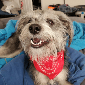 My boyfriend and I adopted him a little over a week ago, and he instantly won our hearts with his award-winning smile. Meet Obi!: My boyfriend and I adopted him a little over a week ago, and he instantly won our hearts with his award-winning smile. Meet Obi!