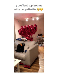 Cute, Funny, and Puppy: my boyfriend suprised me  with a puppy like thise this is literally so funny and cute i can't stop laughing 😭😂😍