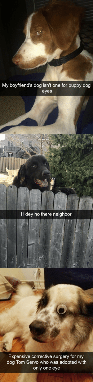 Animal snapsvia @animalsnaps: My boyfriend's dog isn't one for pupp  y dog  eyes   Hidey ho there neighbor   Expensive corrective surgery for my  dog Tom Servo who was adopted with  only one eye Animal snapsvia @animalsnaps