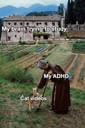 Study and don't lose focus on these profits. Invest now! via /r/MemeEconomy https://ift.tt/2He8UX9: My brain trying to study  My ADHD  Cat videos Study and don't lose focus on these profits. Invest now! via /r/MemeEconomy https://ift.tt/2He8UX9