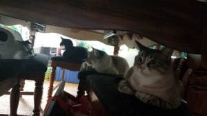 My brother caught his cats having a council to plot his inevitable demise: My brother caught his cats having a council to plot his inevitable demise
