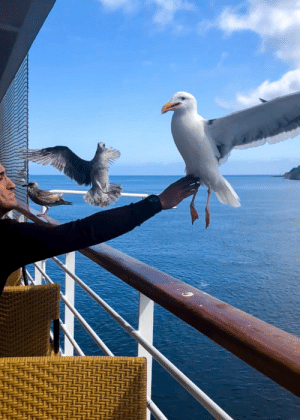 Brother, Seagull, and  Touched: My brother inappropriately touched a seagull