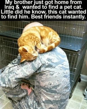 Friends, Memes, and Best: My brother just got home from  Iraq & wanted to find a pet cat.  Little did he know, this cat wanted  to find him. Best friends instantly. Wholesome <3