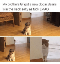 @hilarious.ted is my favourite animal memes page: My brothers Gf got a new dog n Beans  is in the back salty as fuck LMAO @hilarious.ted is my favourite animal memes page
