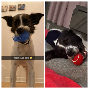 My buddy and his balls, he frequently falls asleep with them in his mouth.: My buddy and his balls, he frequently falls asleep with them in his mouth.