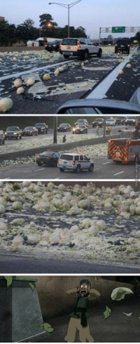 My cabbages!!: My cabbages!!