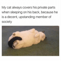 Funny, Covers, and Sleeping: My cat always covers his private parts  when sleeping on his back, because he  is a decent, upstanding member of  society If you say so 🙄 | More 👉 @miinute