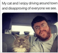 Driving, Grumpy Cat, and Cat: My cat and I enjoy driving around town  and disapproving of everyone we see. 😂😂😂