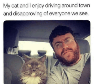 I approve of their disapproval by dickfromaccounting FOLLOW 4 MORE MEMES.: My cat and l enjoy driving around town  and disapproving of everyone we see. I approve of their disapproval by dickfromaccounting FOLLOW 4 MORE MEMES.