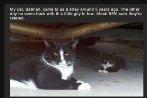 Tow: My cat, Batman, came to us a stray around 5 years ago. The other  day he came back with this little guy in tow. About 99 % sure they're  related.