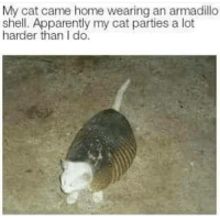 Apparently, Fashion, and Home: My cat came home wearing an armadillo  shell. Apparently my cat parties a lot  harder than I do. Intriguing sense of fashion