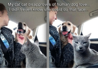 dog love: My cat cat disapproves of human/dog love  didn't even know she could do that face