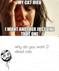Memes, 🤖, and Cat: MY CAT DIED  I WANT ANOTHER JUST LIKE  THAT (ONE  why do you want 2  dead cats Comment WEIRDO letter by letter without getting interrupted 🔥