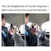 "Your cat's a hater | More 👉 @miinute: ""My cat disapproves of human-dog love. I  didn't even know she could do that face..."" Your cat's a hater 