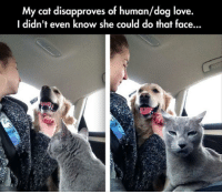 Love, Dog, and Cat: My cat disapproves of human/dog love.  I didn't even know she could do that face...