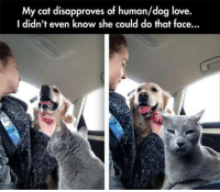 Cats, Dogs, and Love: My cat disapproves of human/dog love.  I didn't even know she could do that face...