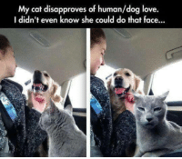 Memes, 🤖, and Human Dog: My cat disapproves of human/dog love.  I didn't even know she could do that face...