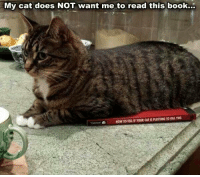 Smart cat!: My cat does NOT want me to read this book... Smart cat!