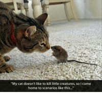 """Memes, Home, and Coming Home: """"My cat doesn't like to kill little creatures, so I come  home to scenarios like this..."""" <3 ;)"""