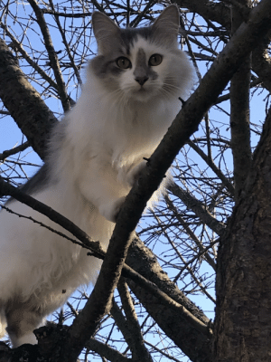 Cat, Wilderness, and The: My cat exploring the wilderness!