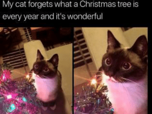 Wholesome Christmas: My cat forgets what a Christmas tree is  every year and it's wonderful Wholesome Christmas