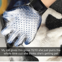 Crazy, Funny, and Link: My cat gives this glove 15/10 she just purrs the  whole time cuz she thinks she's getting pet Pet lovers are going Crazy over these Deshedding Gloves from @indigopetco 😍No more annoying loose hairs. Grooming has never been so easy!!🙀 60% off Today only!! Tap the link in @indigopetco's bio to get yours! (The 3rd Slide is INSANE! 🙌) - SHOP: @indigopetco www.indigopetco.com