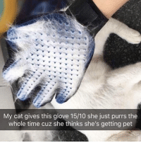 Animals, Crazy, and Funny: My cat gives this glove 15/10 she just purrs the  whole time cuz she thinks she's getting pet Pet lovers are going Crazy over these Deshedding Gloves! 😍 No more annoying loose hairs. Grooming has never been so easy 🙀 Tap the link in @indigopetco's bio to get yours today! 💞 Shop today and save 60% off! - 20% of EVERY sale is donated to the ASPCA & AAWL for homeless animals! www.indigopetco.com