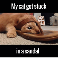 My cat got stuck  ES  in sandal I'm not sure how this is possible, but this cat managed it... via ViralHog
