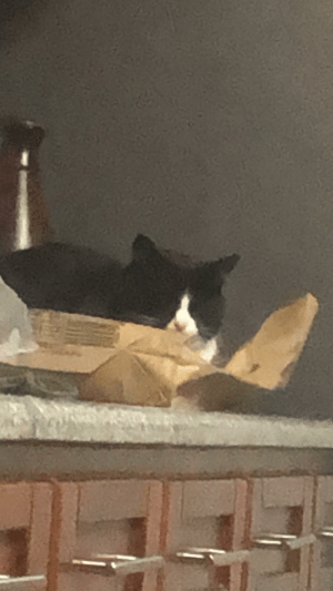 my cat has beds, rugs, a lot of chairs and stuff, but she still prefers sleeping in the paper bag because she's eco: my cat has beds, rugs, a lot of chairs and stuff, but she still prefers sleeping in the paper bag because she's eco