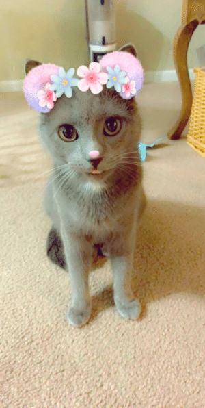 My cat in a Snapchat filter! I have multiple, so expect more in the future: My cat in a Snapchat filter! I have multiple, so expect more in the future