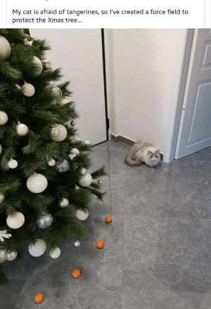 Use the force: My cat is afraid of tangerines, so l've created a force field to  protect the Xmas tree... Use the force
