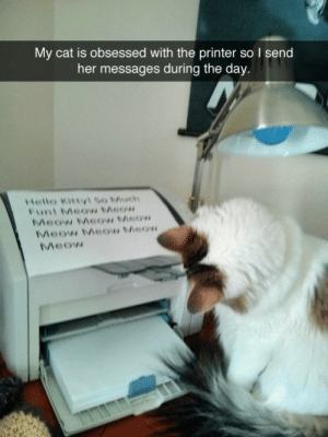 Send Her: My cat is obsessed with the printer so I send  her messages during the day.  Hello Kittyl So Much  Funi Meow Meow  Meow Meow Meow  Meow Meow Meow  Meow