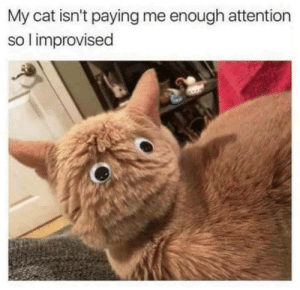 You gotta make your only friend pay attention somehow . by RePotSirKay FOLLOW 4 MORE MEMES.: My cat isn't paying me enough attention  so l improvised You gotta make your only friend pay attention somehow . by RePotSirKay FOLLOW 4 MORE MEMES.